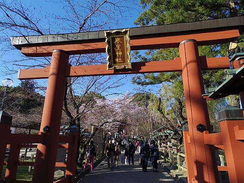 しだれ桜2015@氷室神社(奈良市)-01