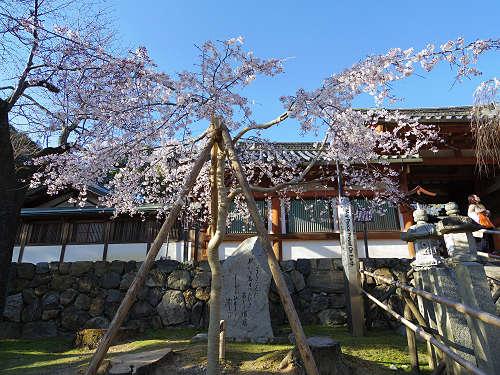しだれ桜2015@氷室神社(奈良市)-17