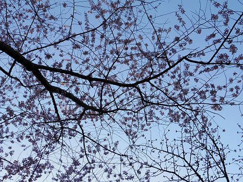 春の鷺池@奈良公園-10