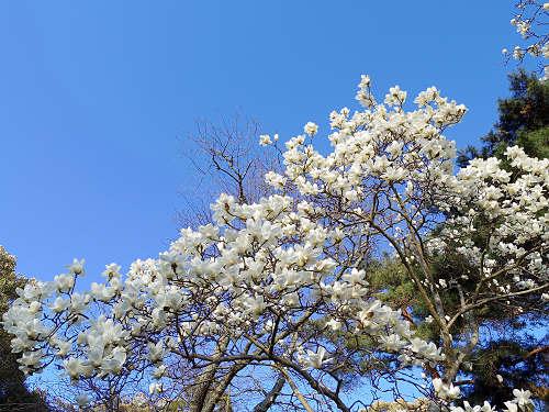 春の鷺池@奈良公園-11