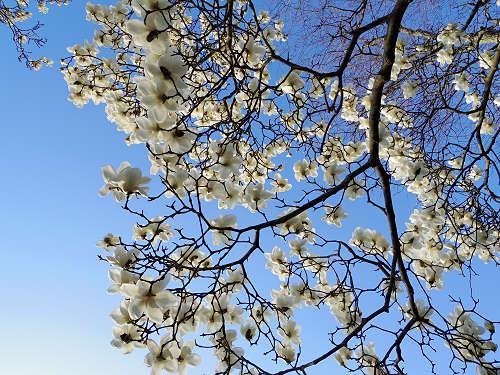 春の鷺池@奈良公園-12