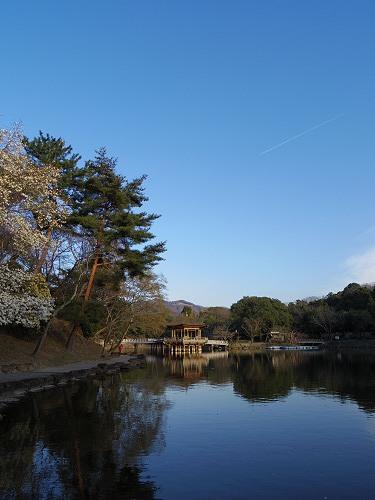 春の鷺池@奈良公園-14