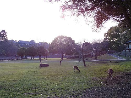 荒池の夕景@奈良公園-15