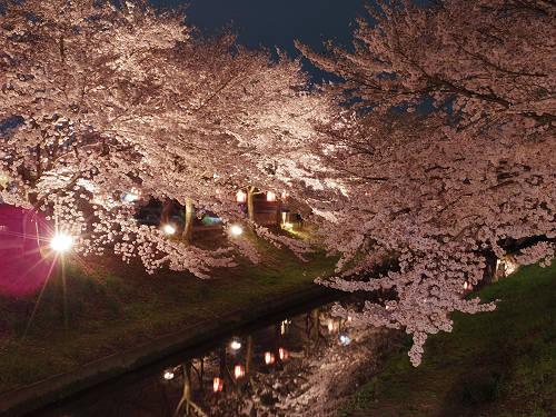 佐保川の夜桜ライトアップ@奈良市-03