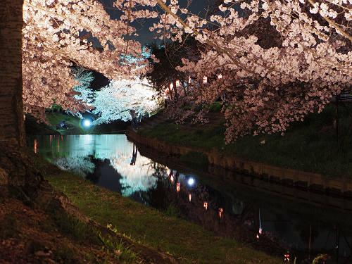 佐保川の夜桜ライトアップ@奈良市-04