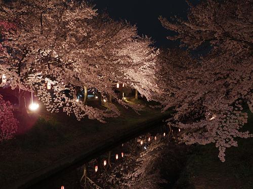 佐保川の夜桜ライトアップ@奈良市-05