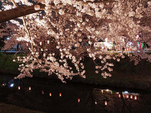 佐保川の夜桜ライトアップ@奈良市-07