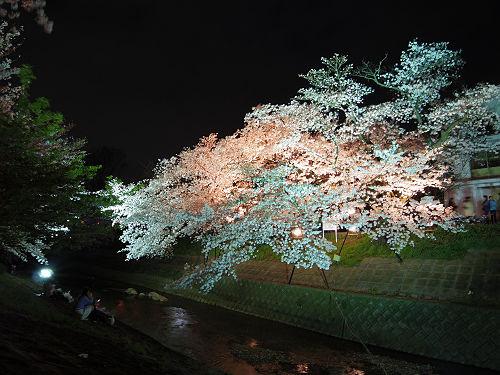 佐保川の夜桜ライトアップ@奈良市-09