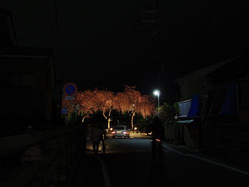 佐保川の夜桜ライトアップ@奈良市-12