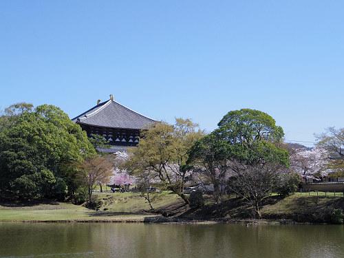 東大寺・奈良公園の桜(2015年)-05