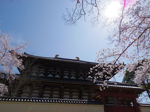 東大寺・奈良公園の桜(2015年)-07