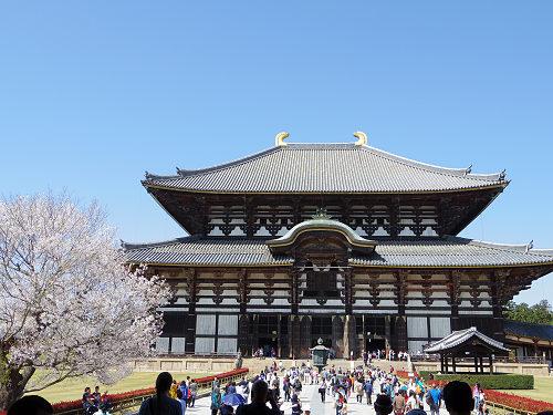東大寺・奈良公園の桜(2015年)-09