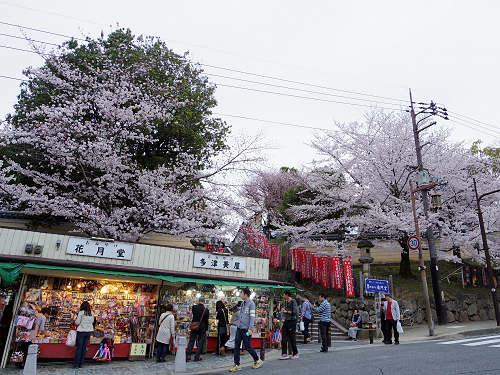 東大寺・奈良公園の桜(2015年)-22