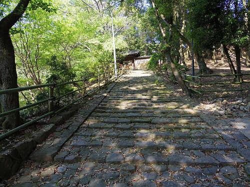 ナラノヤエザクラを探して@奈良公園周辺-11