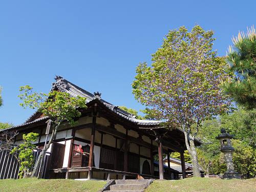 ナラノヤエザクラを探して@奈良公園周辺-14