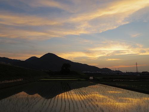 田植え直後の水田に映った、夕暮れの二上山@香芝市