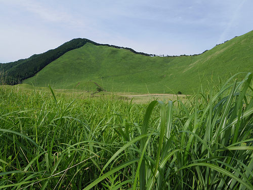 若いススキが青々と茂る、初夏の『曽爾高原』@曽爾村