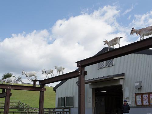 動物たちがたくさん!充実の無料施設『うだ・アニマルパーク』@宇陀市