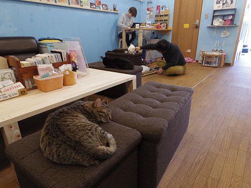 保護猫と里親の出会いの場『保護猫カフェ DearCat』@生駒市