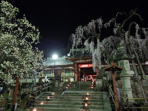 「奈良の一番桜」夜桜&氷献灯で拝見しました @氷室神社(奈良市)