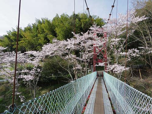 『とっくり湖』にかかる吊り橋と満開の桜 @三郷町