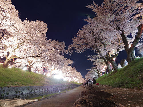 大中公園の美しい夜桜『高田千本桜』@大和高田市