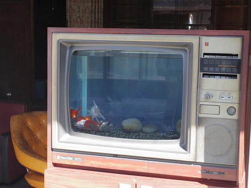 電話ボックス・テレビ・レンジ!進化型の金魚水槽@大和郡山市