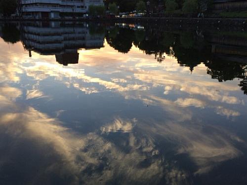 カルガモ親子・鹿・猿沢池の夕焼け。初夏の奈良の風景