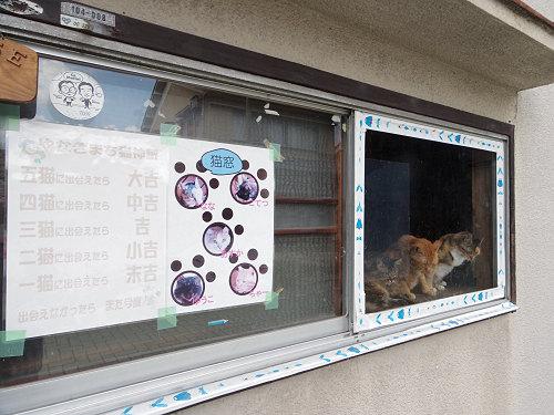 窓に並ぶ猫の数で運勢がわかる?『猫窓』@大和郡山市