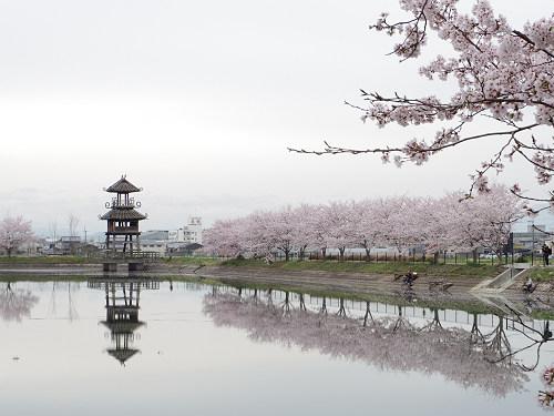 復元楼閣と満開の桜 @唐古・鍵遺跡(田原本町)