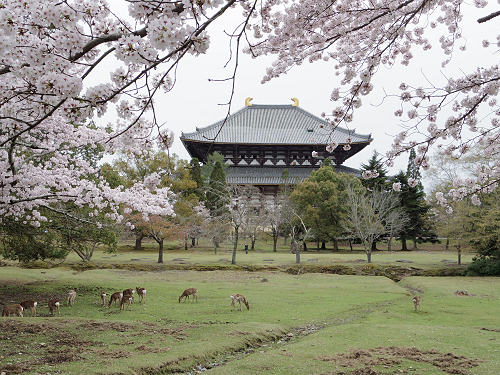 東大寺・奈良公園の桜を観てきました(2017年版)