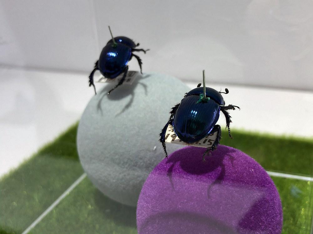 糞虫の聖地・奈良に誕生した私設博物館『ならまち糞虫館』