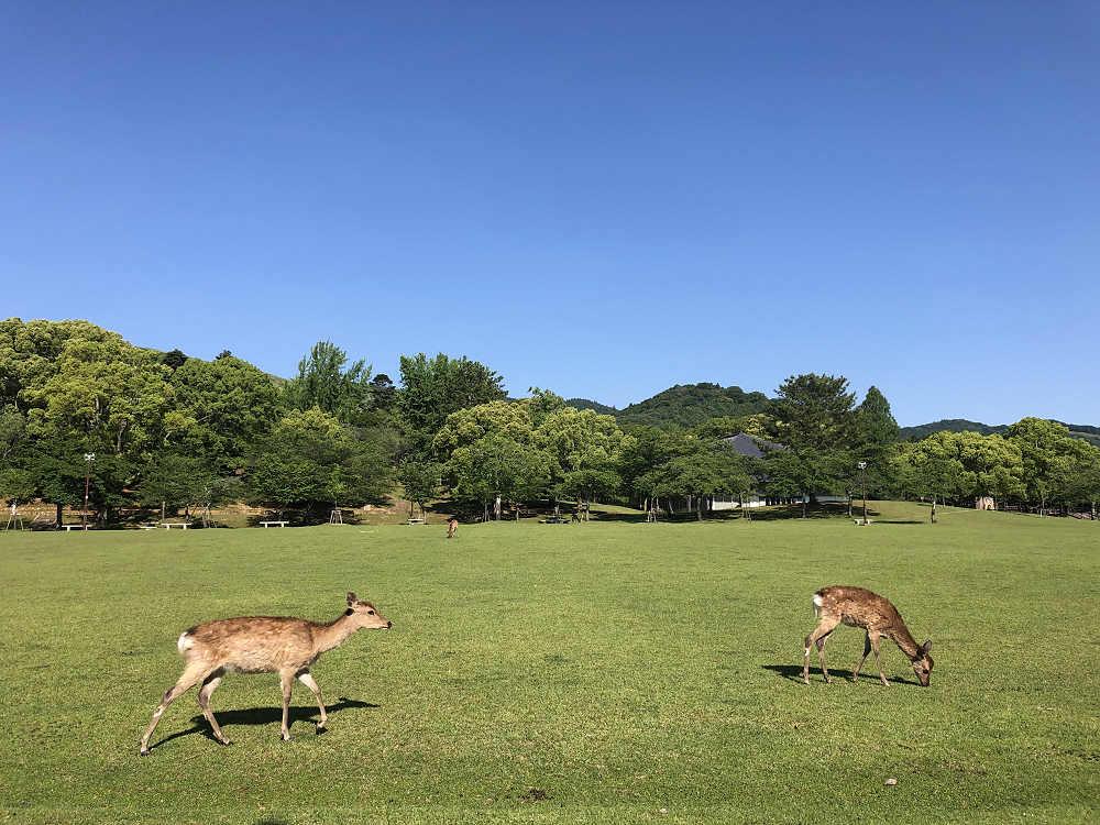 久しぶりに鹿と遊んだり、奈良観光してきました(2020/05/28)