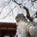 【奈良県内の桜の名所レポート】一覧