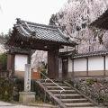 しだれ桜と磨崖仏のお寺『大野寺』