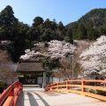 仏像も見事!桜が美しい女人高野『室生寺』@宇陀市