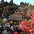 紅葉で大混雑の『室生寺』に行きました