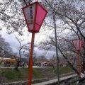 【桜】急な寒さに開花は遅れ気味@高田川