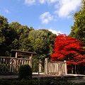 美しい紅葉と見事な御陵『皇極・斉明天皇陵』@高取町