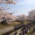 大中公園で『高田川の千本桜』のお花見を@大和高田市