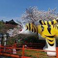 満開の桜と灌仏会の甘茶がけ『信貴山 朝護孫子寺』@平群町