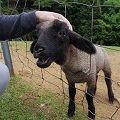 羊せんべいも!羊と触れ合える『めえめえ牧場』@山添村
