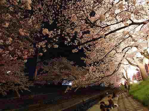 『高田の千本桜』を夜桜で@大中公園(大和高田市)